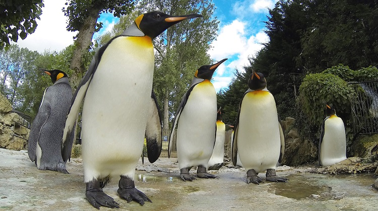 Penguins at Birdland Park & Gardens