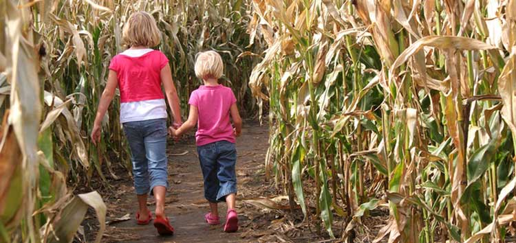 Enjoy the maize maze at Adam Henson's Cotswold Farm Park this summer