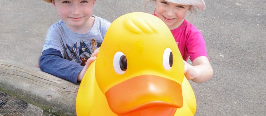 Giant duck hunt at Slimbridge Wetland Centre