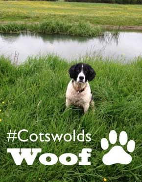 Terriers Rufus and Heidi tell us their favourite dog walks in the Cotswolds!