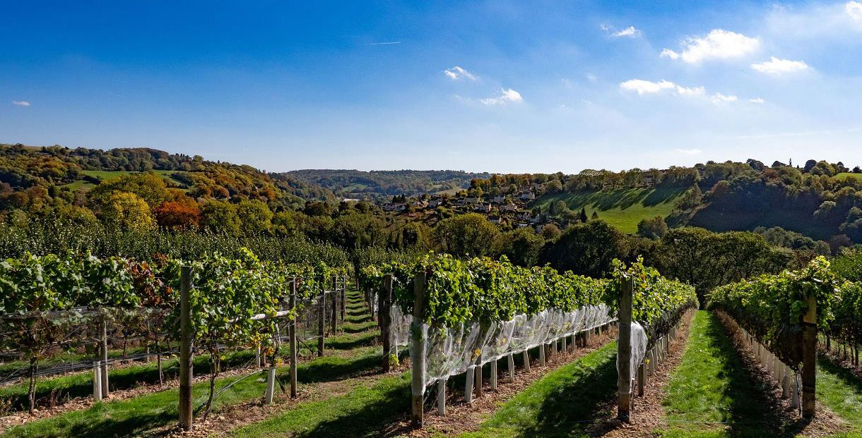 A Taste of the Undiscovered Cotswolds – a wine tasting & food pairing experience