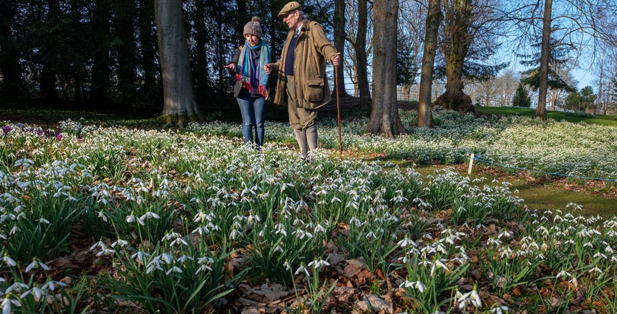 The Historic Snowdrop Garden Cotswolds