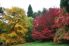 Explore the country's largest private collection of trees and shrubs at Batsford Arboretum