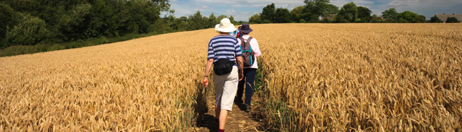 Guided walks in the Cotswolds