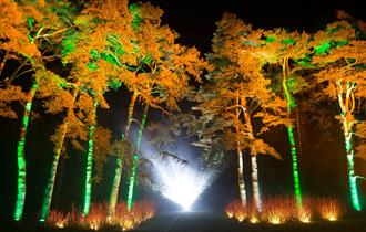 Enchanted Christmas at Westonbirt (photo Paul Box)