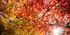 Autumn Colour at Westonbirt Arboretum (Paul Groom)