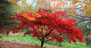 Autumnal colour at Batsford Arboretum