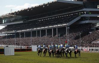 Runners racing down towards the grandstand at Cheltenham