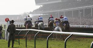 Cheltenham Festival Preview Night