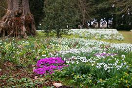 Snowdrop Weekends - Colesbourne Park