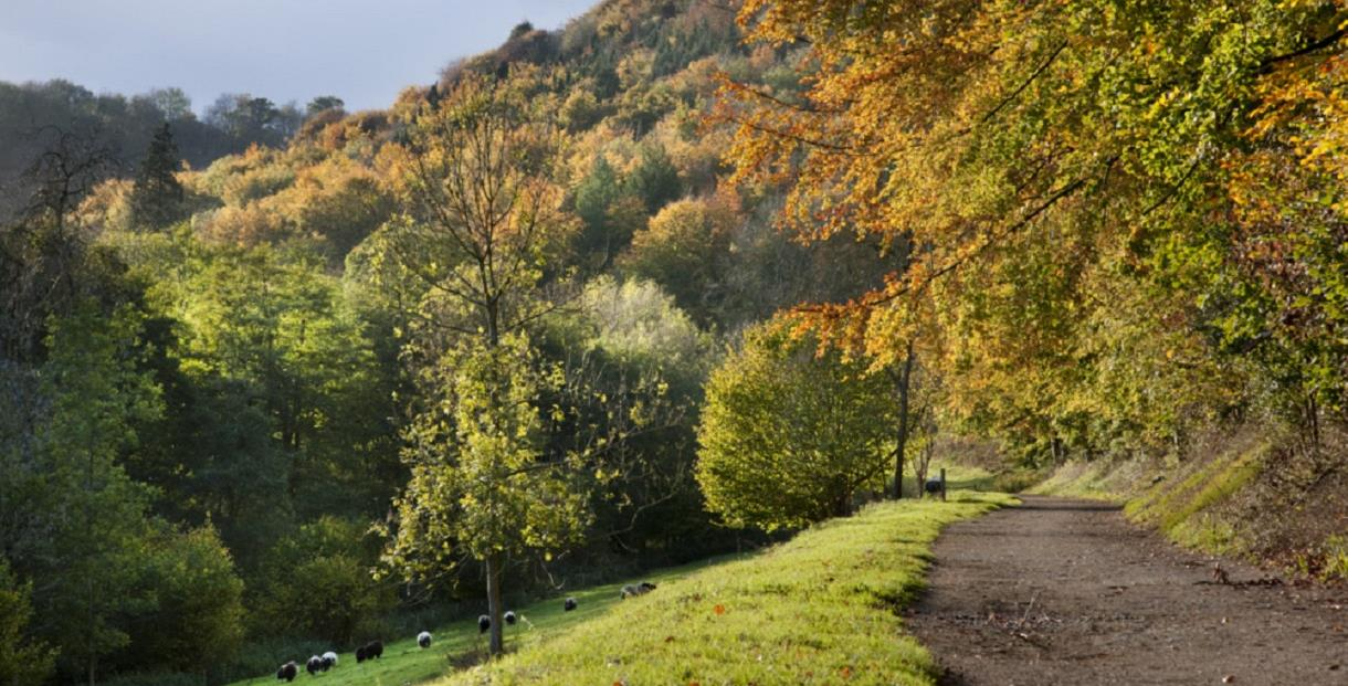 Valley walk at Woodchester Park (photo by Andrew Butler ©National Trust Images)