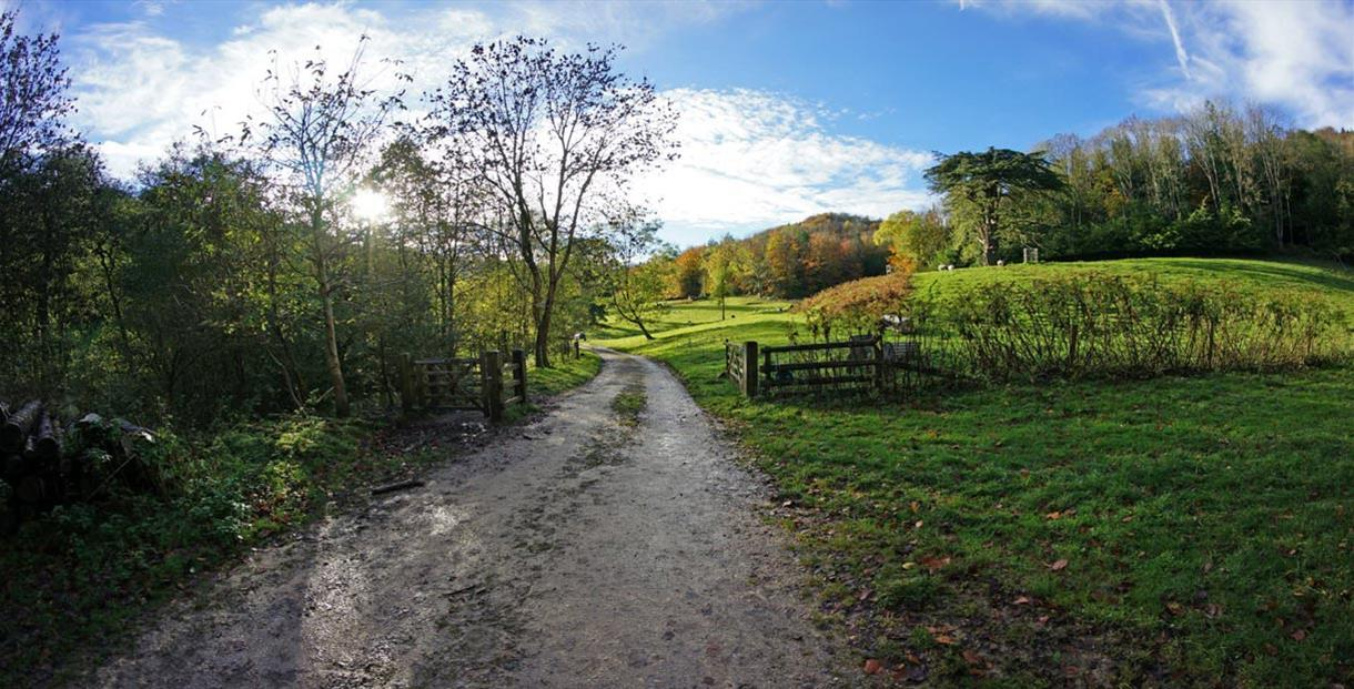 Woodchester Park (courtesy of the National Trust)